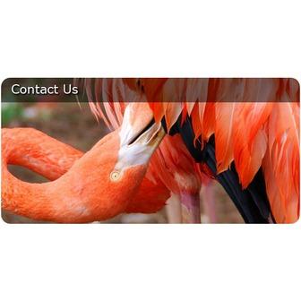 /53413_contact_us_52898.jpg