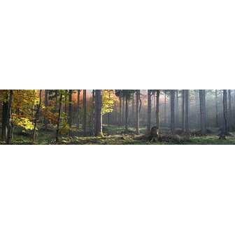 /734_trees_59188.jpg