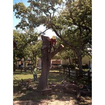 /a-matt-tree-service_76007.jpg