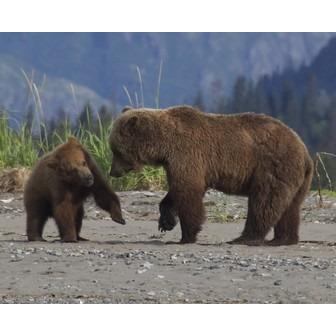 /abler-bears-12_147307.jpg