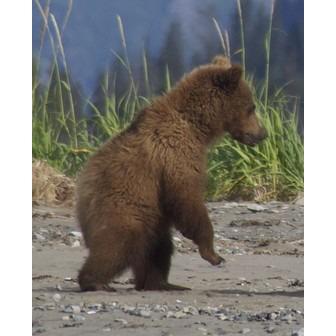 /abler-bears-16-1_143248.jpg