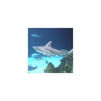 /albuquerque-aquarium_49536.jpg