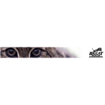 /big-cat-rescue-fishing-cat-banner2_48564.jpg