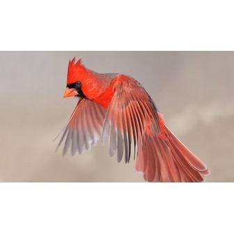 /bop_birding-tp_____jpg_610x343_crop_upscale_q85_55822.jpg