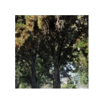 /bp_trees_57271.png