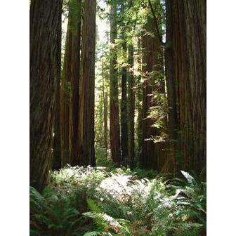 /california_60561.jpg