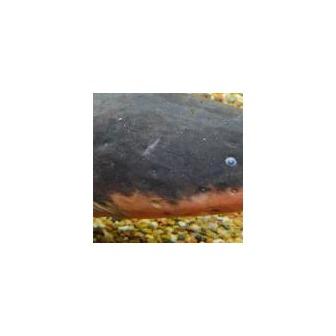 /children-s-aquarium-at_48381.jpg
