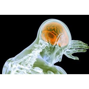 /concussion1_101906.png
