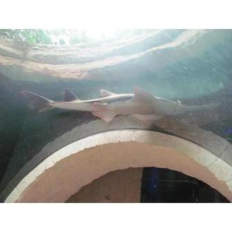 /dallas-world-aquarium_48378.jpg