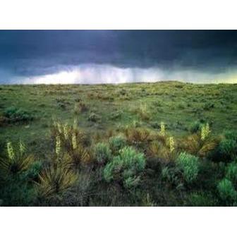 /grassland_57118.jpg