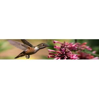 /hummingbirdbanner_49474.jpg