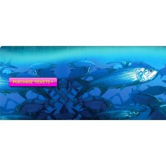 /key-west-fish1_59085.jpg