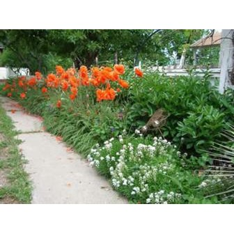 /long-s-iris-gardens_53171.jpg