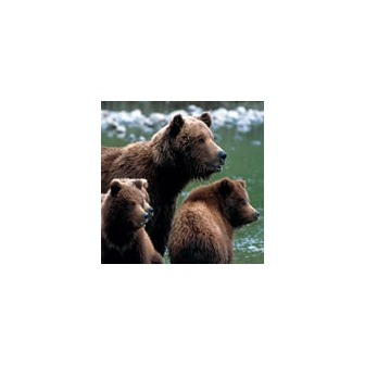 /nps_brownbear150x150_50259.jpg