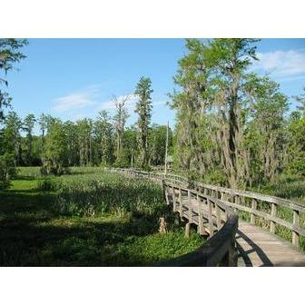 /phinizy-swamp-nature_51540.jpg