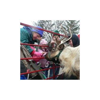 /reindeer-appeal_53132.jpg