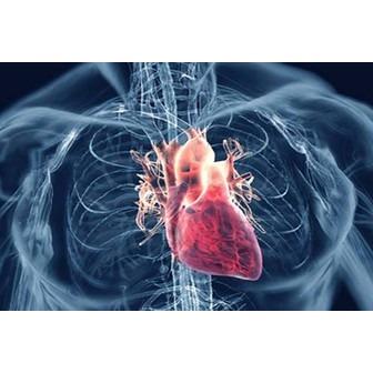/rheumatic-heart-disease_101939.jpg