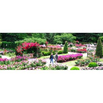 /rose-garden-pictures-010_61566.jpg