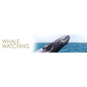 /sdhe_subpage_promo_pane_whale_watch2_62093.jpg