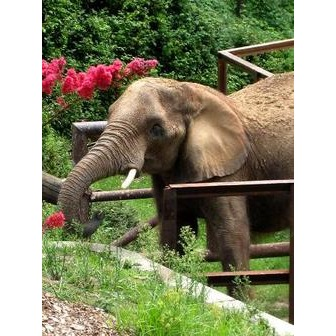 /the-zoo-s-elephant-program_46765.jpg