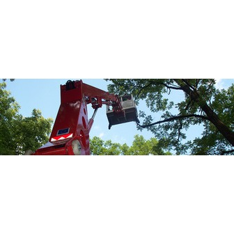 /tree-removal-indianapolis_68206.jpg