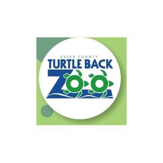 /turtle-back-zoo_50566.jpg