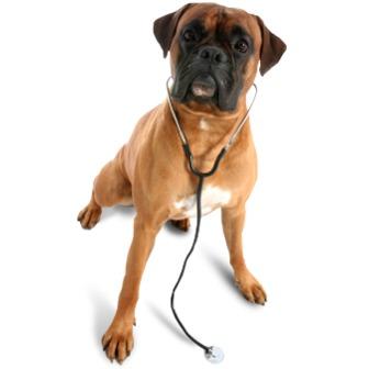 /veterinarian-dog_47059.png
