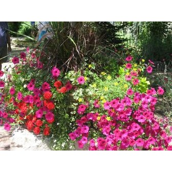 /vibrant-flowers_53164.jpg