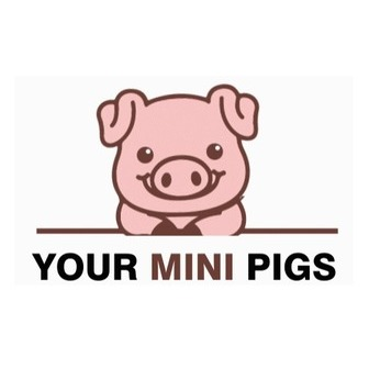/your_mini_pigs_official_logo_195458.jpg