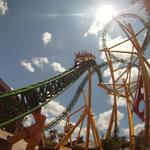 Cheetah - Busch Gardens, Tampa, Florida