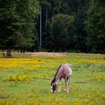Horse Grazing Near Birmingham Alabama
