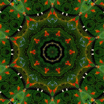 Kal Rainforest Beadwork