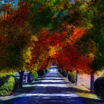 Painting of a pathway in Autumn