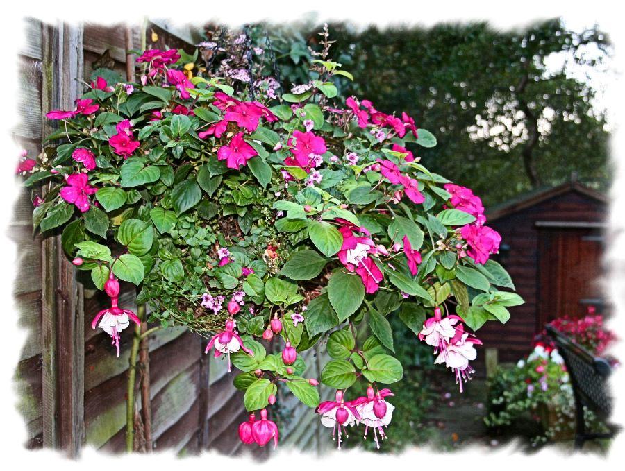 Hanging basket of flowers Hanging basket flowers