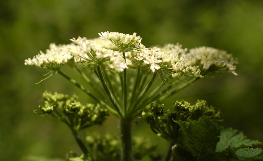 White wildflower mightylinksfo
