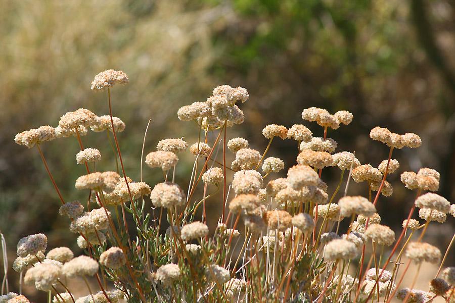 Wild desert plant