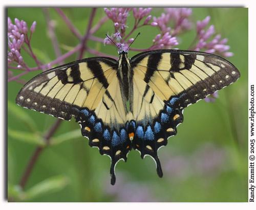 طبيعه تجنن Butterfly_9705