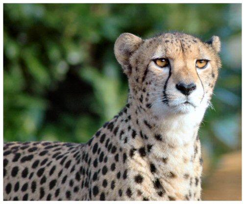 Ulqu's release is... Cheetah_7058