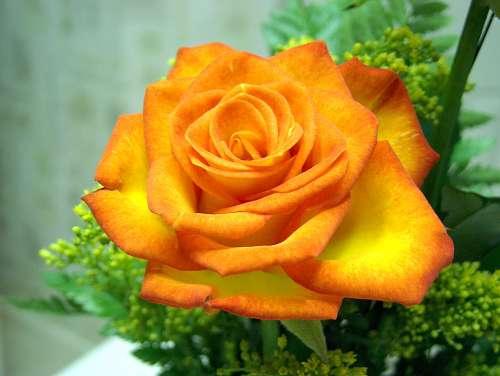 flower_1053