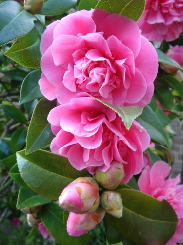 http://www.thelensflare.com/large/flower_24972.jpg