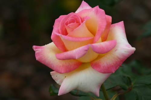 http://cdn.mymarkettoolkit.com/90/gallery/medium/pink_20989.jpg