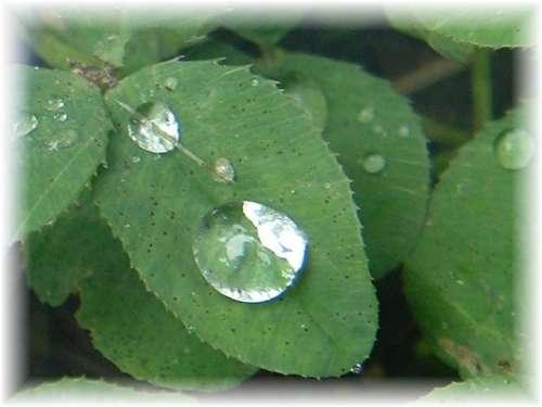 rain_1624.jpg