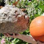 #2 hornet nest/ball