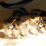 2 wasps