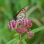 7.25 Butterfly Bliss