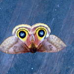 moth 7