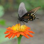 8.13 Butterfly In Orange