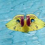 moth 8