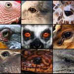 9 Part Animal Eyes