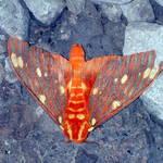 moth 9